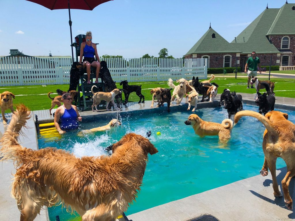 Luxury Doggie Daycare